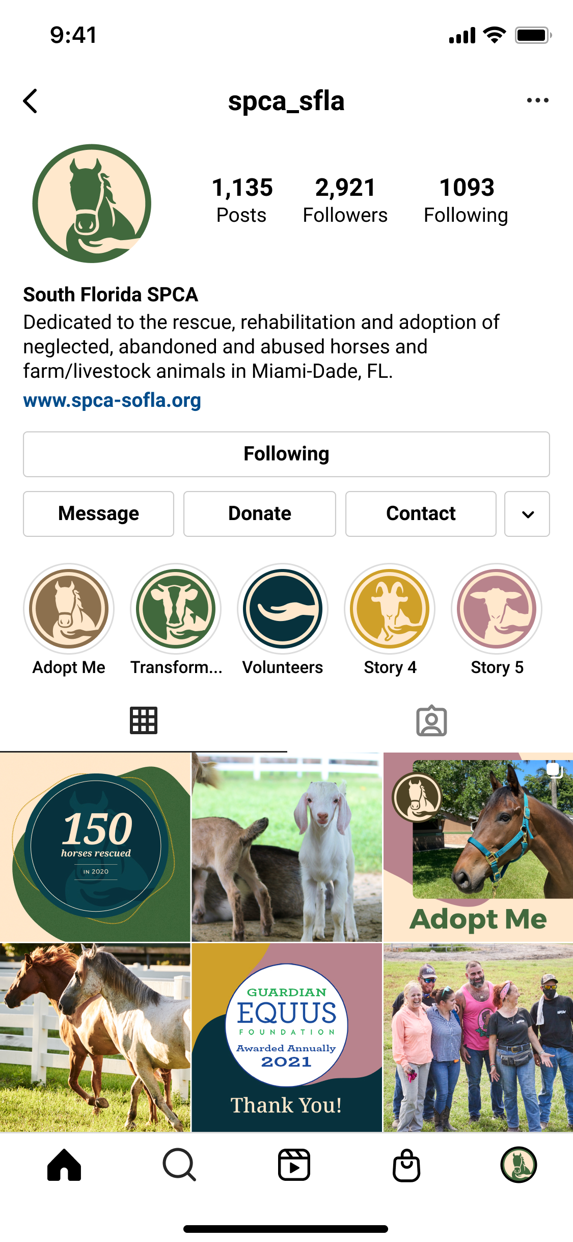 South Florida SPCA Instagram Feed template
