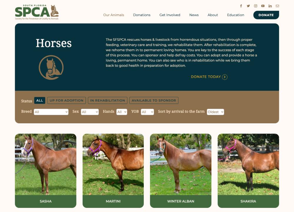SFSPCA Horses up for Adoption