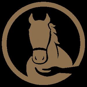 Marketing Horses for Adoption